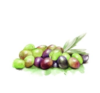 Aceite de Oliva Ecológicos