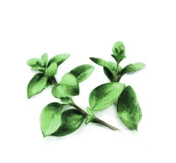 Aceites de oliva aromatizados