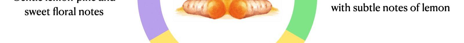 Cúrcuma, especia amarilla