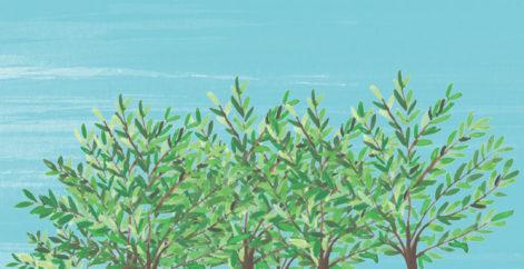 Reforestando el mundo un árbol a la vez